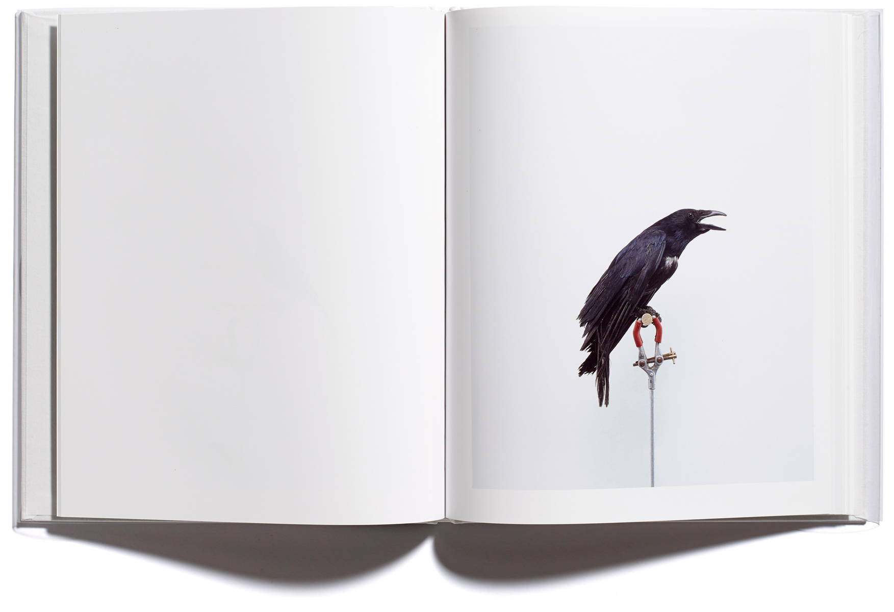 Browns Editions, Jonathan Ellery, London Garden Birds, designed by Browns Design book